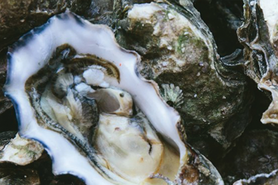 Pier37Oysters